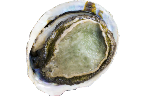 Abalones/ormeaux